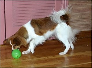 Mental Stimulation: Dogs get bored too!