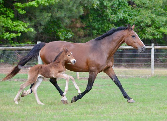 Parvita and her 2019 Carrico filly