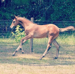 So happy with how this filly is turning