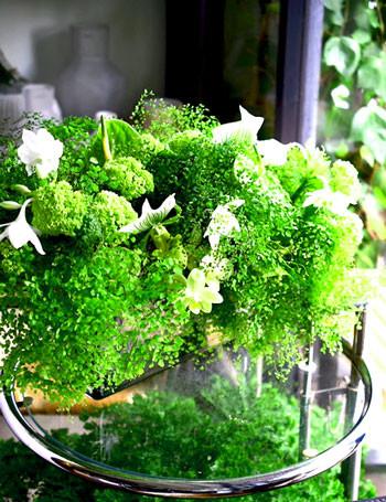 Flower styling アジアンタムのコンポジション