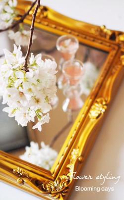 桜のスタイリング