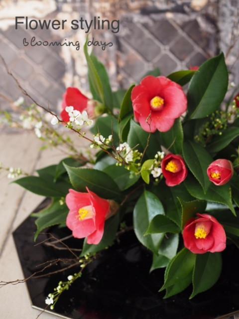 Flower styling 花のある暮らし 椿