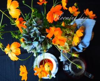 Flower Styling オレンジコスモス 10/2