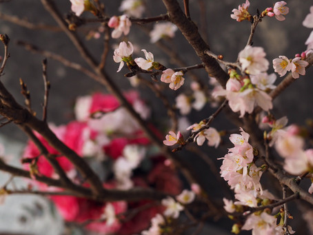 Flower styling 桜