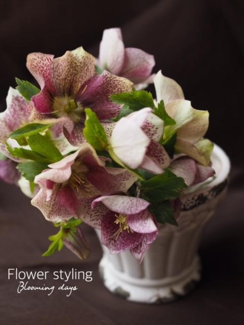 Flower styling  花のある暮らし クリスマスローズ