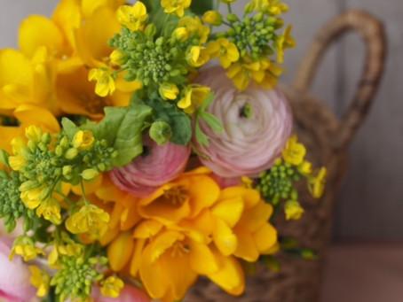 Flower styling 菜の花