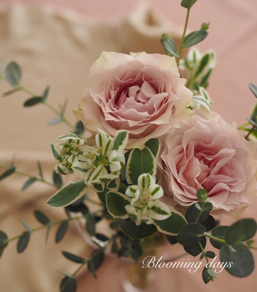 Flower styling 初雪草