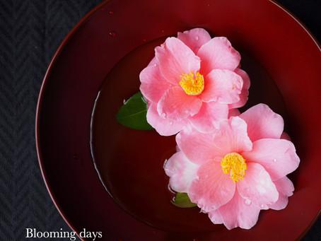 Flower styling 卯月