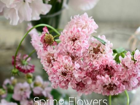 Flower styling  初花月