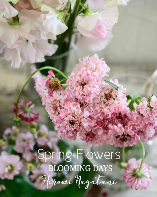 Flower styling  初花月春の花