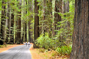 2013-Sept-cycling-Humboldt-Redwoods-Stat