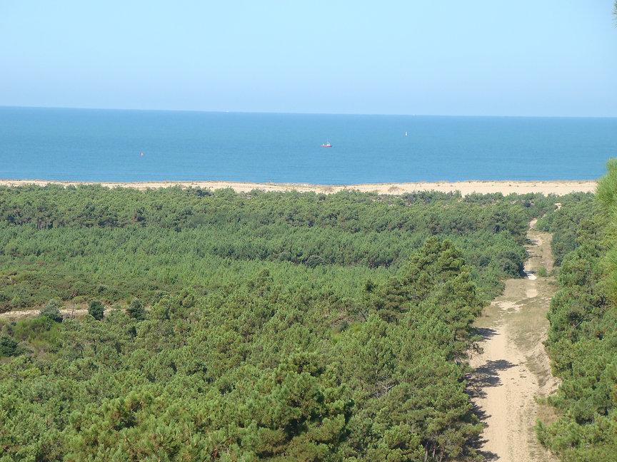 Beach & Forest near Saint Augustin sur Mer
