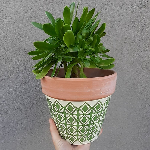Aeonium arboreum in painted terra cotta pot