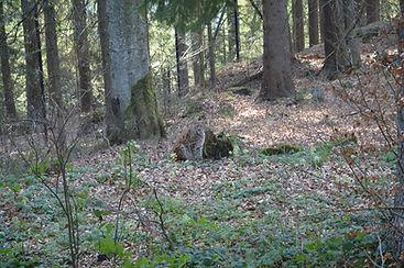 Nationalpark am 29.03.2014 090.JPG
