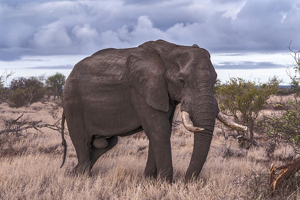 Elephant%20in%20Wild_edited.jpg