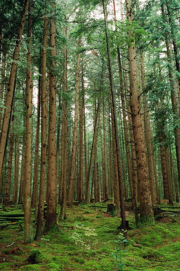 5-emerald_forest_film-2-1.jpg