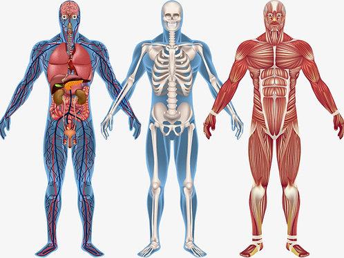 Corso di Anatomo-fisio-patologia