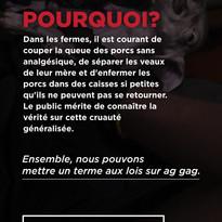 Story 11 (FR) .jpg