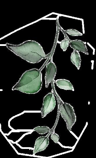 Eucalyptus_1_bearbeitet.png