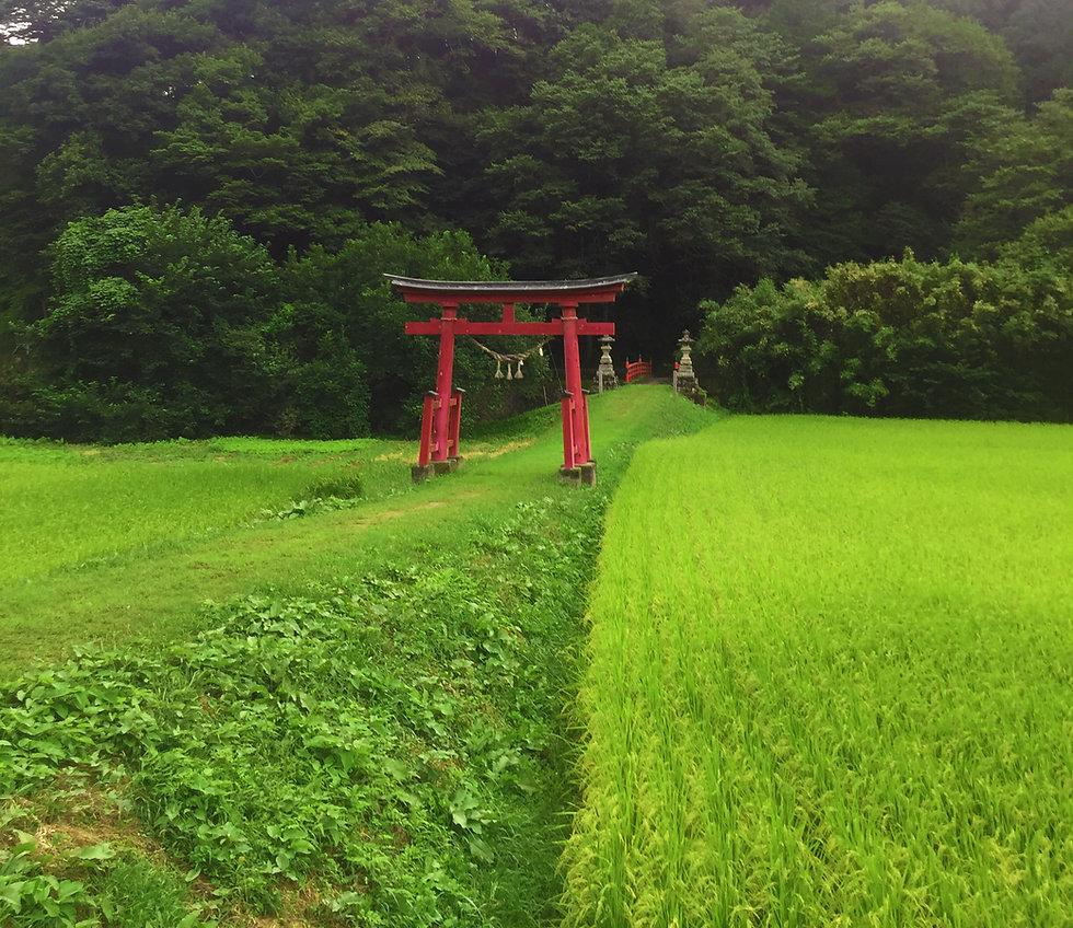 torii02.jpg