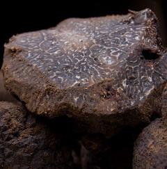 marché aux truffes de talairan
