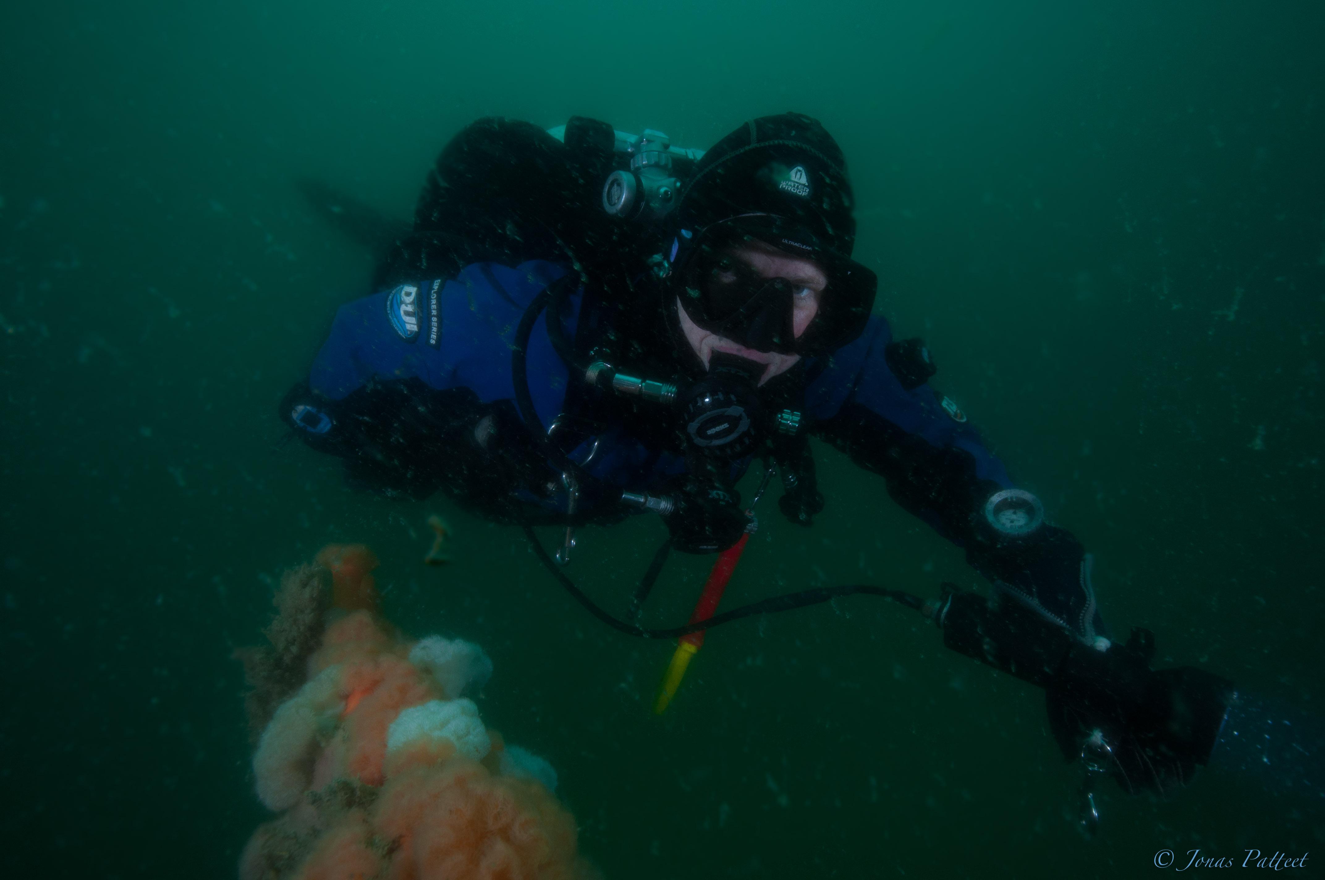 GUE.be duiker