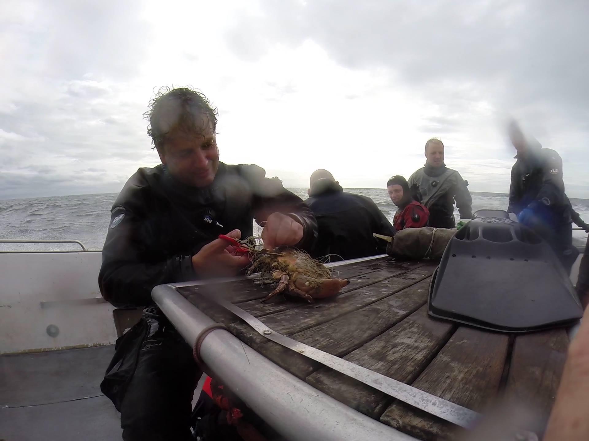 Krabben verlossen