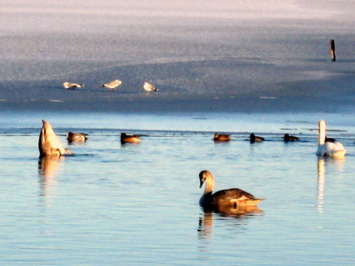 Loch Birds