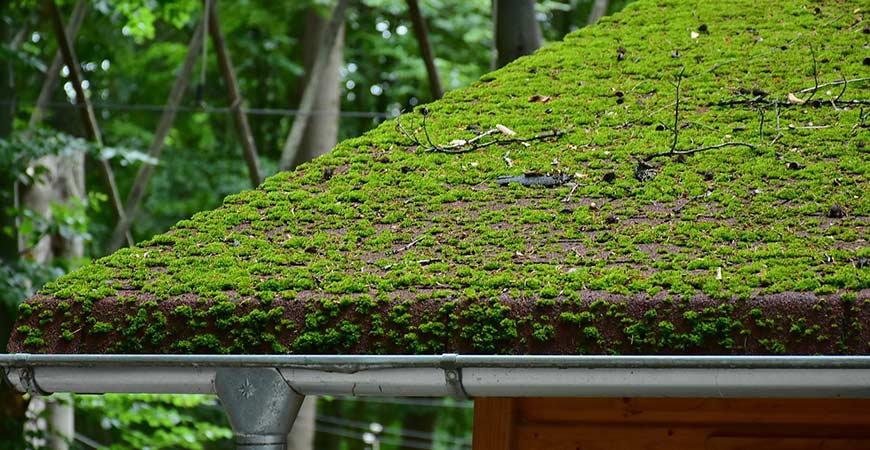 roof-moss.jpg