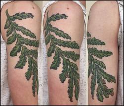 cameron's prehistoric fern