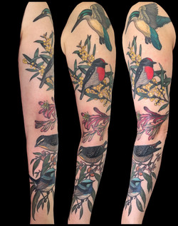 janine's birds