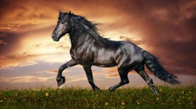 5 Tips Mudah Cara Membeli Kuda yang Tepat
