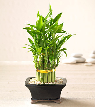 The BEST Feng Shui Plants For Your Home Or Office!