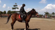 Tips Latihan Kuda - Belajar Cara Melatih Kuda