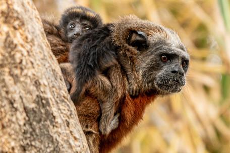 Los niños monos