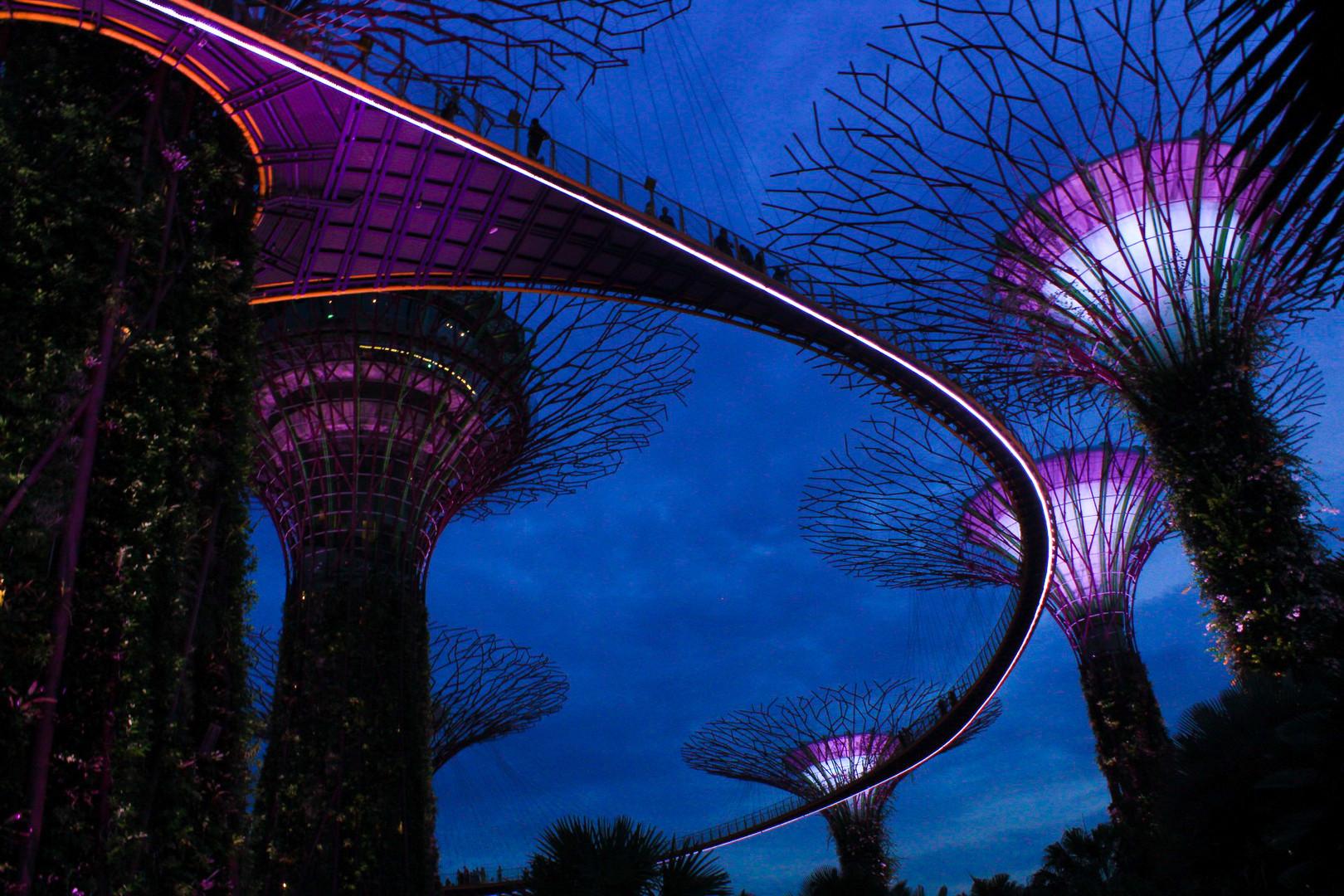 La nuit tombe sur les arbres de la Garden bay à Singapour