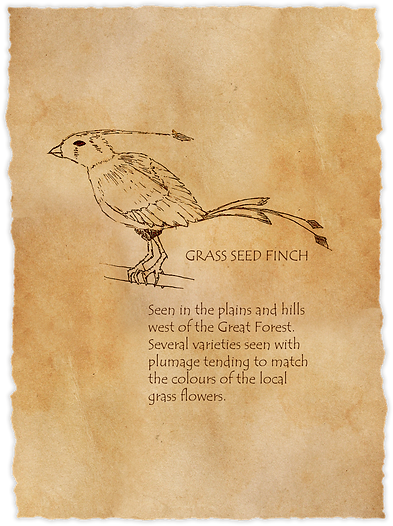 03d Gras Seed Finch.png