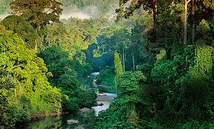 Image - Jungle.jpg