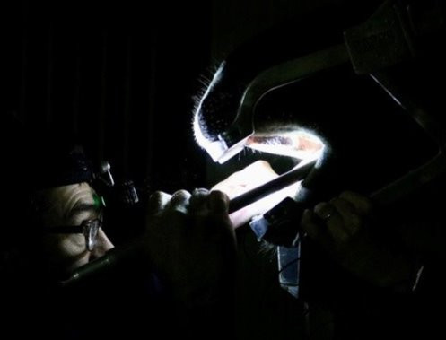 Why do we Perform Equine Dentistry