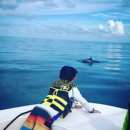 Seeing a lot of dolphins today!😍🐬.jpg