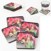 Staffie & Amaryllis Coasters.png
