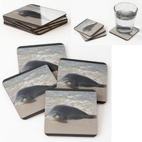 Hawaiian Seal Coasters.png