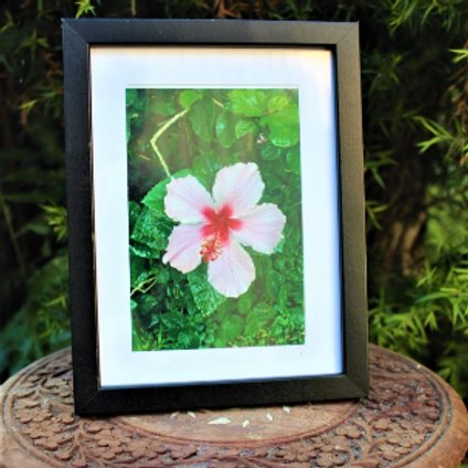 Framed Photo (Pink Hibiscus)
