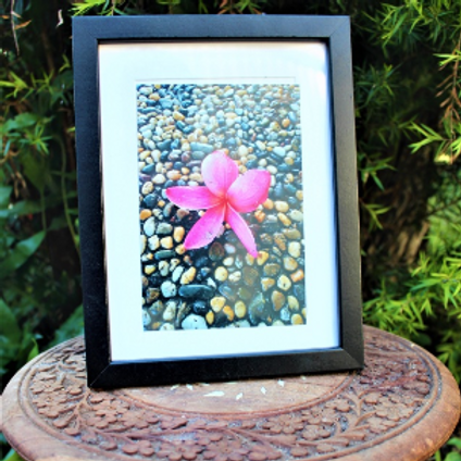 Framed Photo (Pink Frangipani)