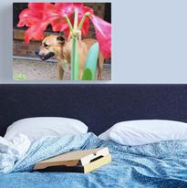 Staffie & Amaryllis Canvas.png