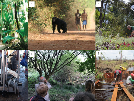 How will COVID-19 impact biodiversity conservation? New paper published this week
