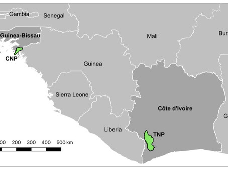 Reporting leprosy in wild chimpanzees