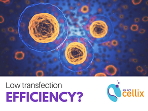 Low Transfection Efficiency? 5 Points You May Not Have Considered