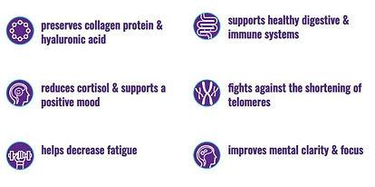 Elite nutritional bullet points.JPG