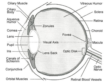 Protect against age-related Vision loss